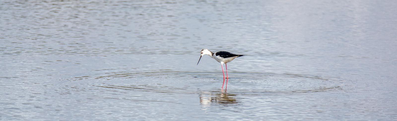 oiseau dans l eau